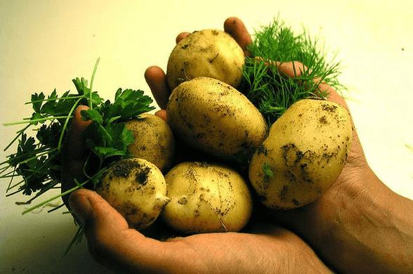 ziemniakinietucza